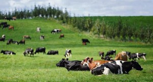 Real-time monitor to help farmers boost milk quality